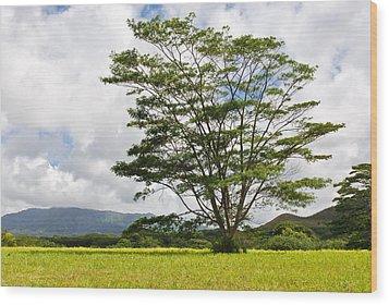 Wood Print featuring the photograph Kauai Umbrella Tree by Shane Kelly
