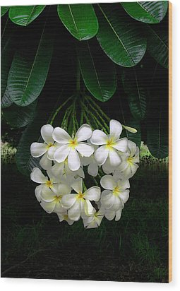 Kawela Plumeria Wood Print by James Temple