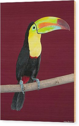 Wood Print featuring the photograph Keel-billed Toucan 4 by Avian Resources