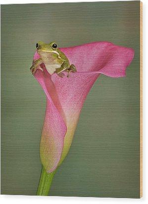 Kermit Peeking Out Wood Print by Susan Candelario