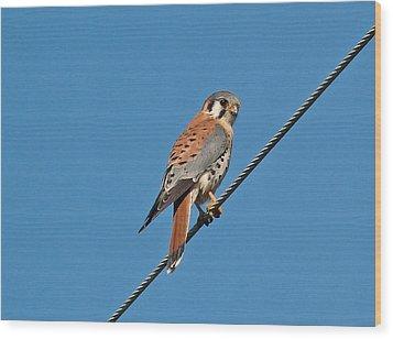 Kessler Hawk  Wood Print by Gracia  Molloy