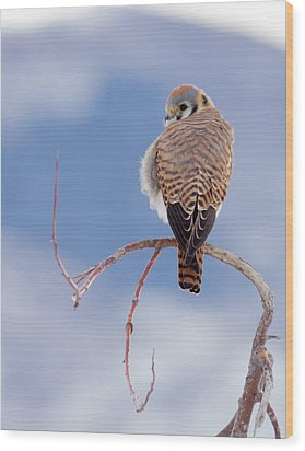 Kestrel In The Cold Wood Print by Jeremy Farnsworth