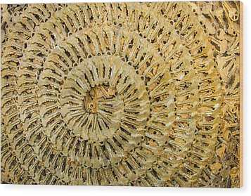 Key Ring Wood Print by Jean Noren