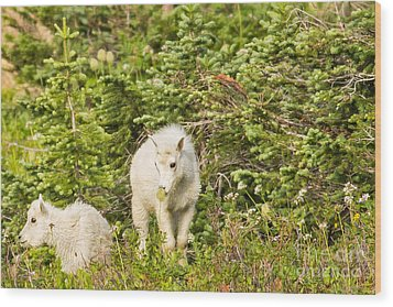 Kids In Glacier Np 3 Wood Print by Natural Focal Point Photography