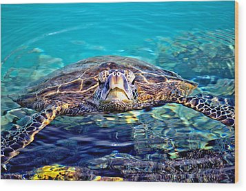 Kiholo Turtle Wood Print by Bob Kinnison