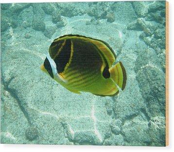 Kikapapu Fish Wood Print by Karen Nicholson