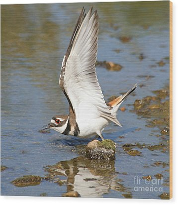 Wood Print featuring the photograph Killdeer-2 by Bob and Jan Shriner