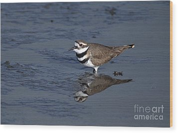 Killdeer Plover Charadrius Vociferus Wood Print by Ron Sanford