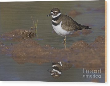 Wood Print featuring the photograph Killdeer Reflection by Bryan Keil