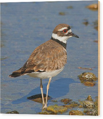 Wood Print featuring the photograph Killdeer Wading by Bob and Jan Shriner