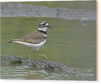 Killdeer Walking Wood Print by Sharon Talson