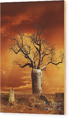Kimberley Dreaming Wood Print