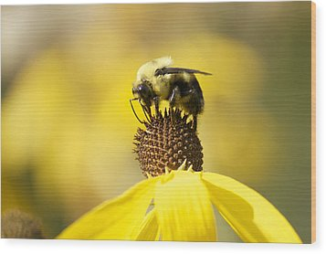 King Of The Coneflower Wood Print by Penny Meyers