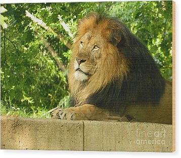 Wood Print featuring the photograph King Of The Jungle by Emmy Marie Vickers