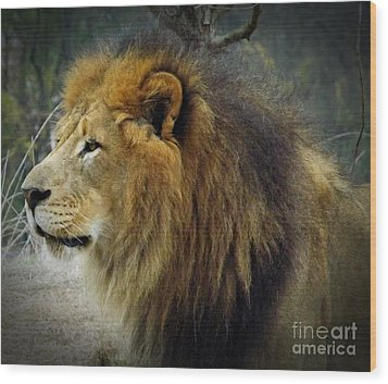 King Of The Jungle Wood Print by Sara  Raber