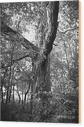 King Of The Timber Bw Wood Print by Garren Zanker