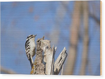 Wood Print featuring the photograph King Of The Tree Top by Dacia Doroff