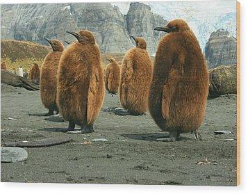 King Penguin Chicks Wood Print