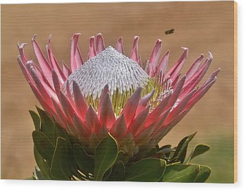 King Protea Wood Print by Werner Lehmann