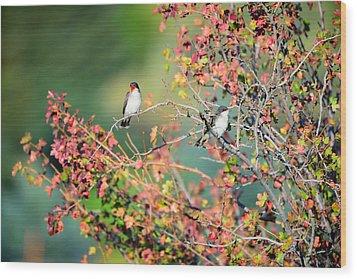 Kingbird Pair Wood Print