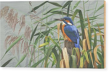 Kingfisher Wood Print by Clive Meredith