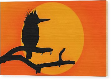 Kingfisher Sunset Wood Print by Brian Stevens