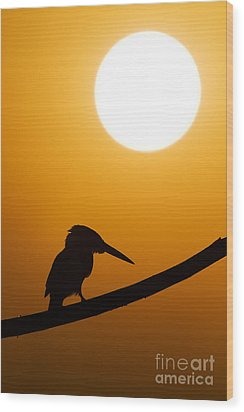 Kingfisher Sunset Silhouette Wood Print by Tim Gainey