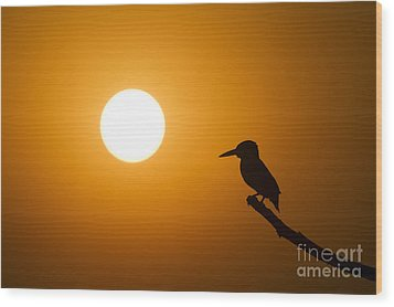 Kingfisher Sunset Wood Print by Tim Gainey