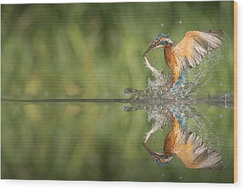 Kingfisher With Catch. Wood Print by Andy Astbury