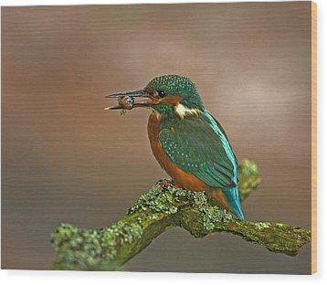 Kingfisher With Stickleback Wood Print