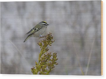 Wood Print featuring the photograph Kinglet by Greg Graham