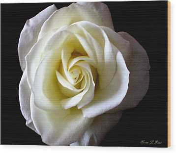 Wood Print featuring the photograph Kiss Of A Rose by Shana Rowe Jackson