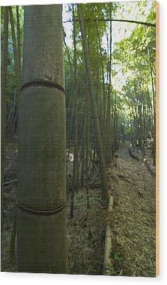 Kissing Bamboo Wood Print by Aaron Bedell