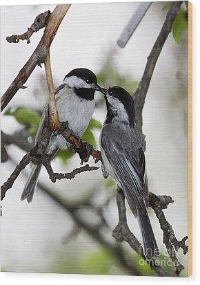 Kissing Chickadees Wood Print