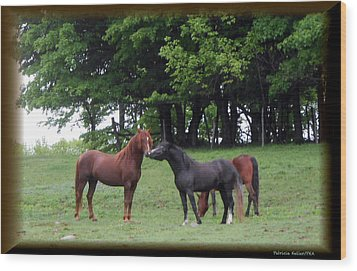 Kissing Cousins- The Paso Fino Stallions Wood Print by Patricia Keller