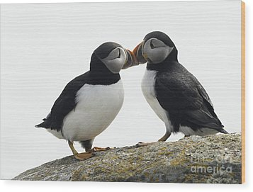 Kissing Puffins Wood Print by Jim  Hatch
