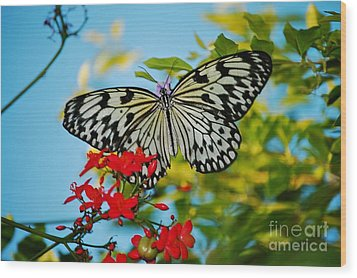 Wood Print featuring the photograph Kite Butterfly by Peggy Franz