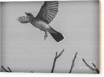 Kite... Wood Print by Dan Hefle