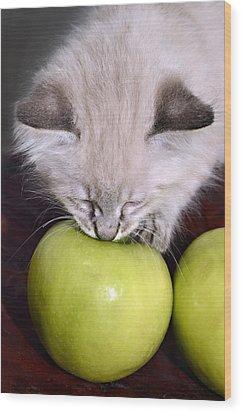 Kitten And An Apple Wood Print by Susan Leggett