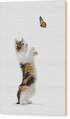 Kitten And Monarch Butterfly Wood Print by Wave Royalty Free