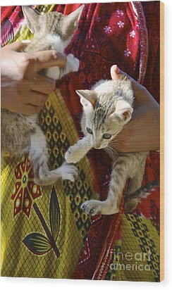Kitten Wood Print by Bobby Mandal