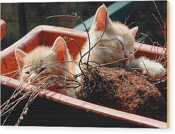 Kitten Flowers Wood Print by Dorothy Berry-Lound