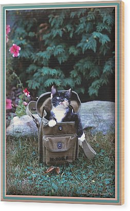 Kitten In A Canvas Bag Wood Print by Patricia Keller