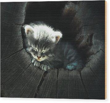 Kitten In A Log Wood Print