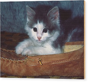 Wood Print featuring the photograph Kitten In Slipper by Sally Weigand