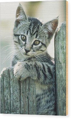 Wood Print featuring the photograph Kitten On Fence by Judi Baker