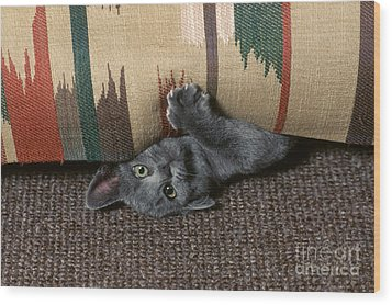 Kitten Under Couch Wood Print by James L. Amos