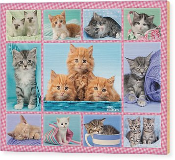 Kittens Gingham Multi-pic Wood Print by Greg Cuddiford
