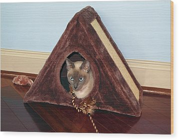Kitty A-frame Wood Print by Sally Weigand