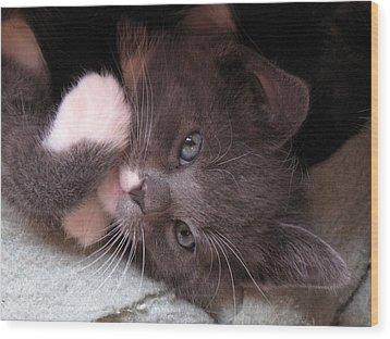 Kitty Cuteness Wood Print